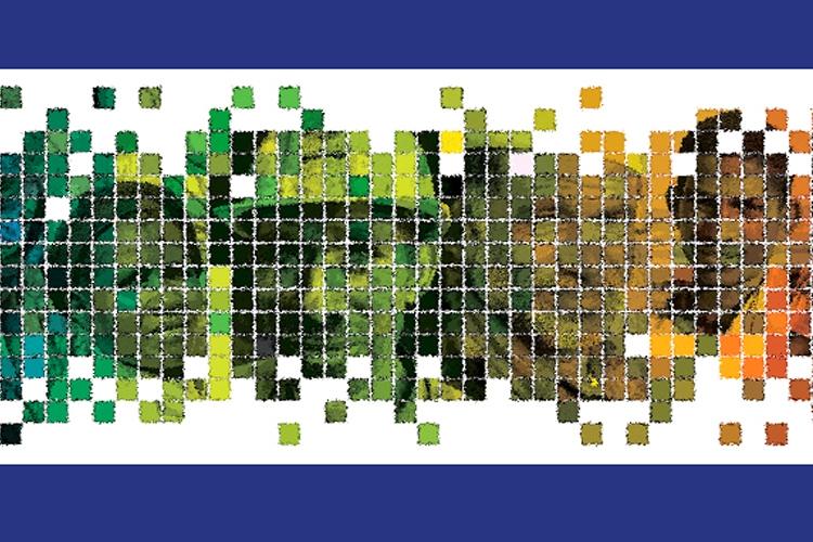collage di volti