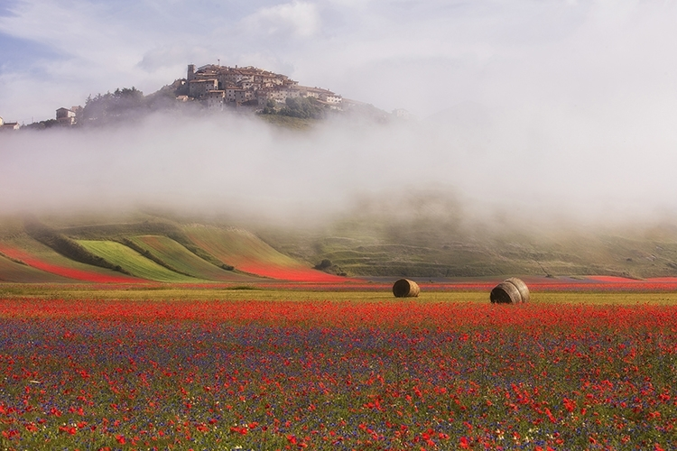 la piana di Castelluccio in fiore